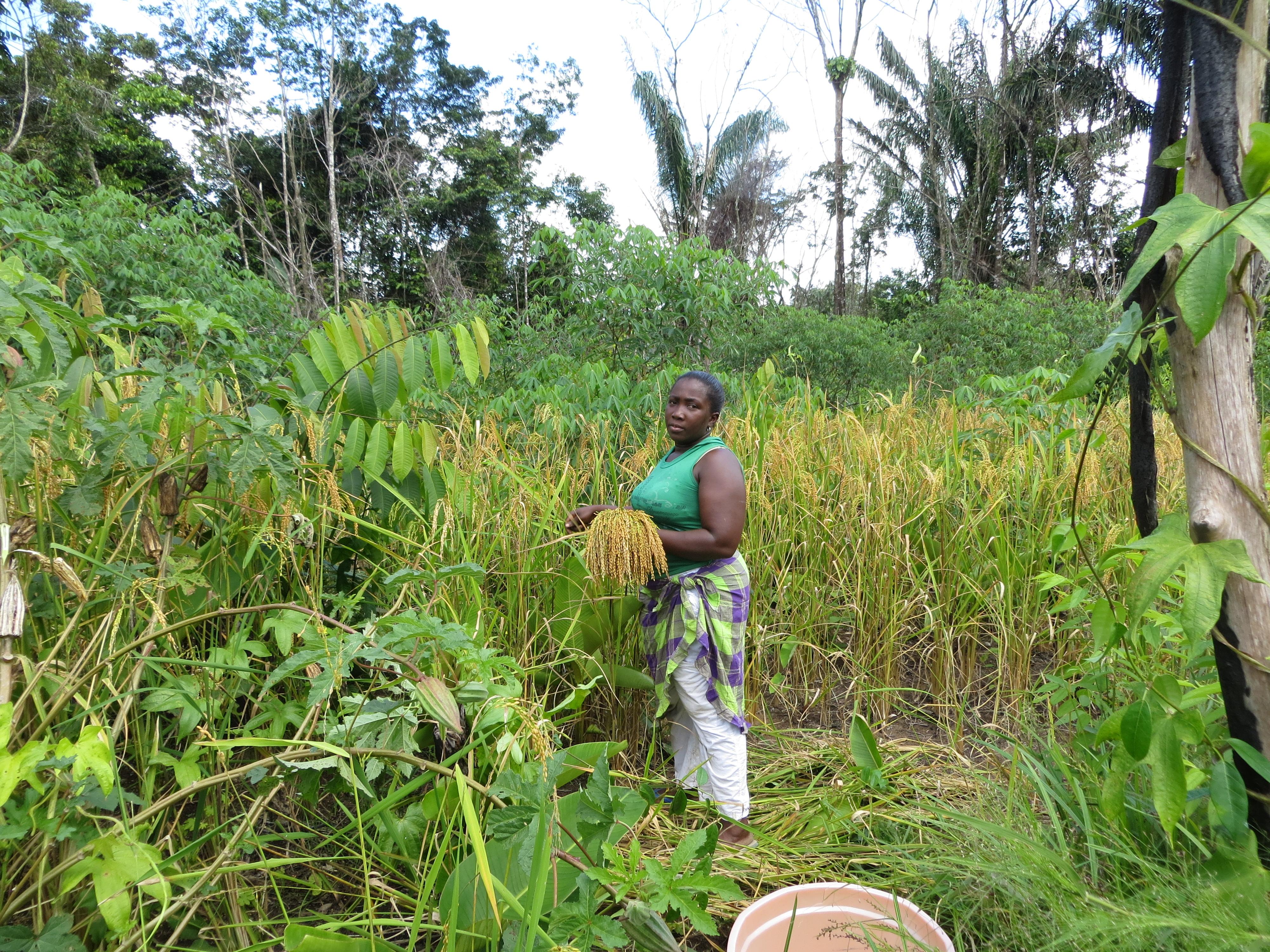 Afrikaanse namen voor Surinaamse planten