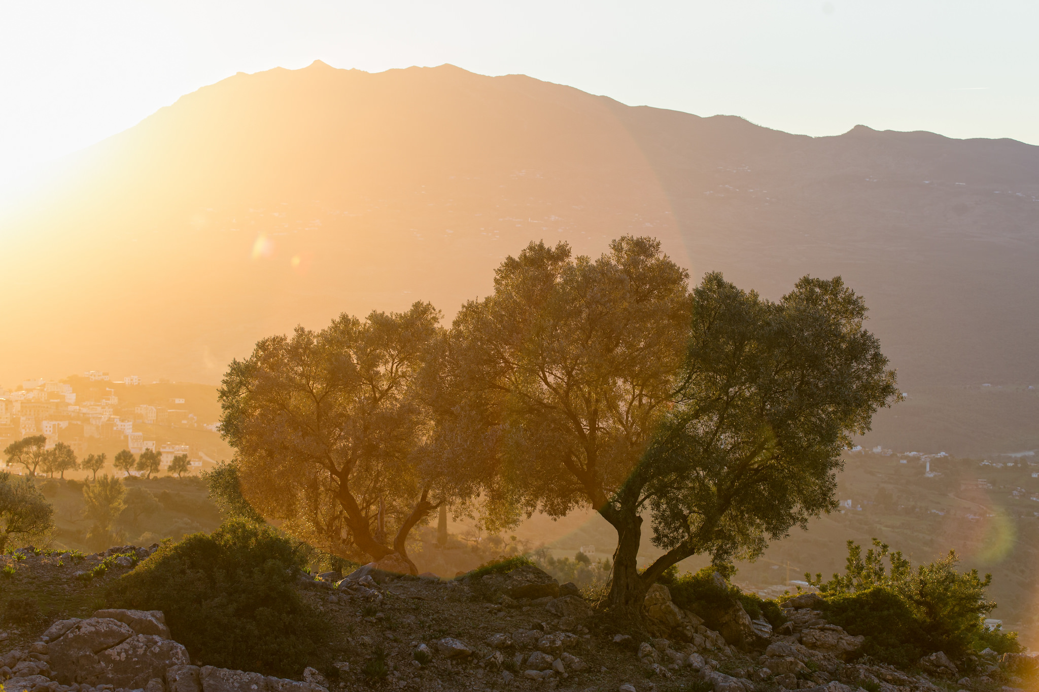 Het Ghomara Berber – of Arabisch?